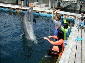 [From Higashi Izu Shibuya]Dolphin swim