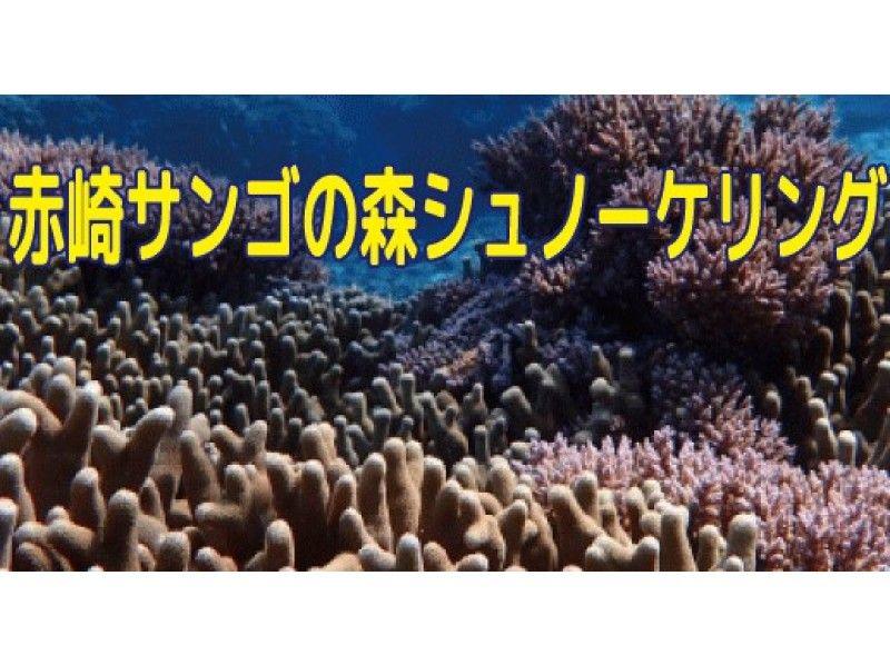 【鹿児島・与論島】熱帯魚(クマノミ)と泳ぐ! 赤崎サンゴの森のシュノーケリング の紹介画像
