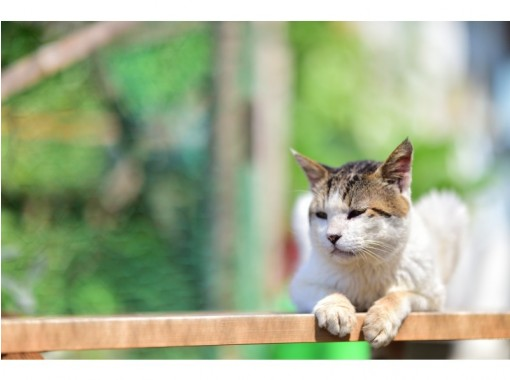 猫の島!にゃんこと仲良くなれるツアー(1ドリンク付き)