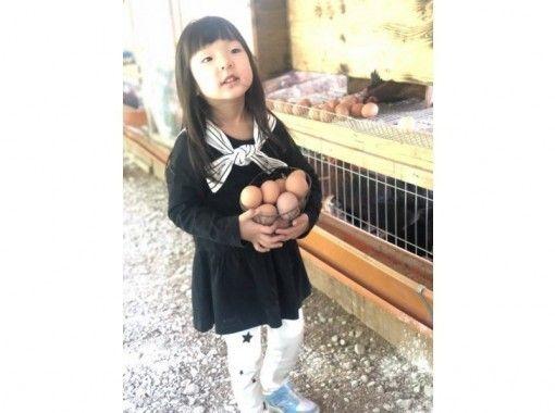 【福井・坂井】福地鶏の餌やりとたまご採り体験&炊きたて卵かけご飯