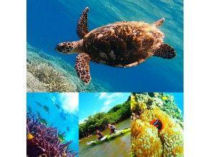 【世界遺産 西表島】高確率!ウミガメと泳ごう!マングローブカヌー×秘境パワースポット巡り&バラス島シュノーケリング【ツアー写真データ無料】