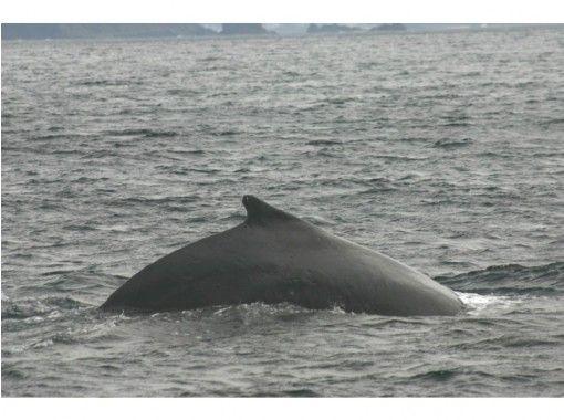 【鹿児島・奄美大島】奄美大島の海でザトウクジラと出会おう!「ホエールウォッチング」