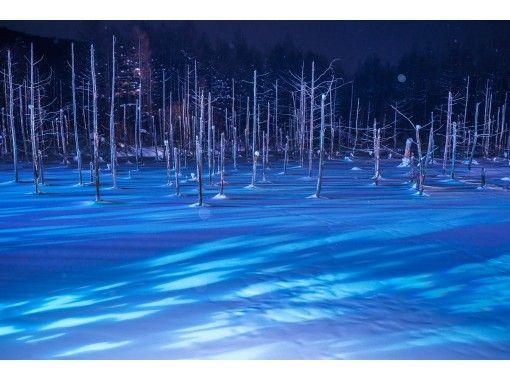 11月~2月【北海道・札幌発着】冬の旭山動物園とライトアップ青い池&白ひげの滝・日帰りバスツアー