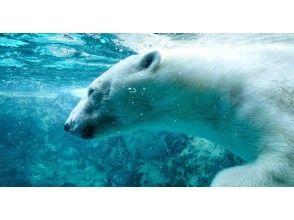 【北海道・札幌発着】GW限定!旭山動物園と富良野・美瑛・ニングルテラス・日帰りバスツアー