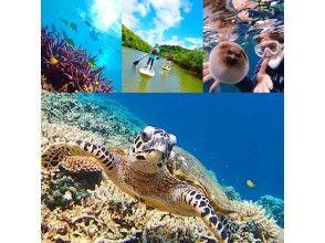 【西表島】a16.バラス島で海ガメと一緒にシュノーケル×マングローブSUP×秘境パワースポット巡り【ツアー写真データ無料】