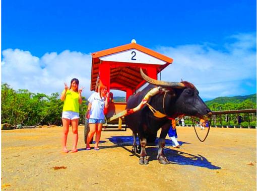 【西表島】a33.マングローブSUP・カヌー秘境パワースポット巡り&由布島観光コース【ツアー写真データ無料】