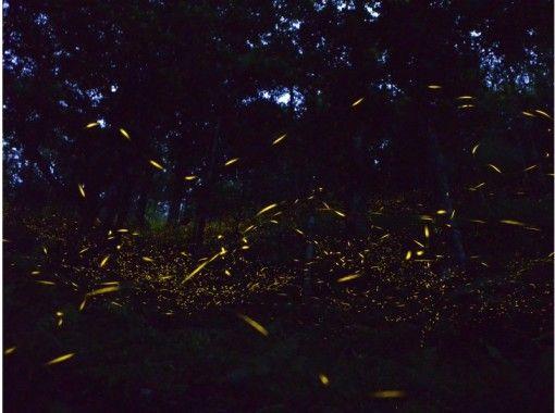 【沖縄・石垣島】幾千の星につつまれる感動体験☆ヤエヤマホタル鑑賞ツアー