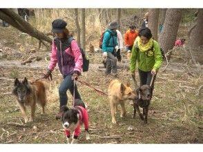 【リクエストにお応えして、急遽開催決定】愛犬と一緒に春の山でお宝探し!鹿角採集散策ツアーU^ェ^U