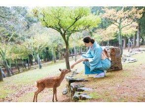【奈良・奈良公園】スーパーセール!本格的な訪問着で奈良を散策しましょう!!