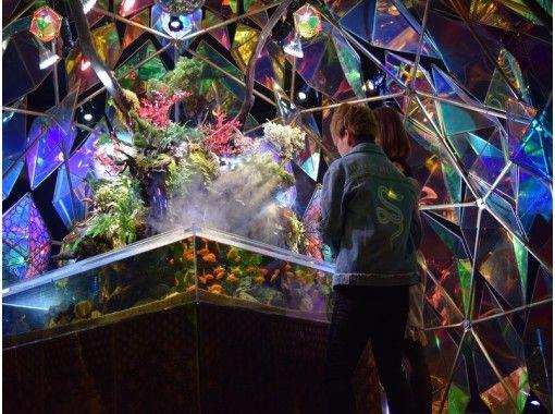 【奈良・奈良市】インスタ映え間違いなし!幻想的なアートと金魚を体験!