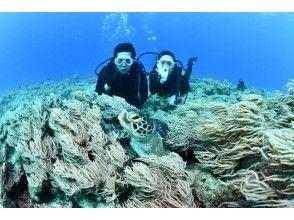 區域優惠券OK | [海龜穴]乘船體驗深潛[1組完全預約! ]電暈對策優秀的店鋪