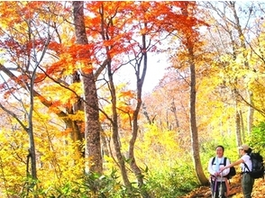 【福島・尾瀬】尾瀬登山プラン(ガイド1名につき参加者は8名まで)の画像