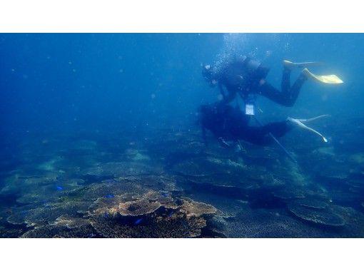 【愛媛・松山 無料送迎付き】フレンドリーな魚に出会える愛南町で体験ダイビング(ビーチ)