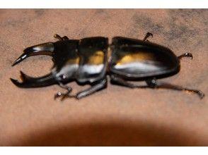 【山形県・飯豊町】オオクワガタも生息する神秘の森の王国で昆虫採集&星空ナイトツアー 1泊2食付