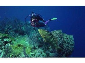 [沖縄/本部區域] VIP私人PADI高級開放水域潛水員課程2天