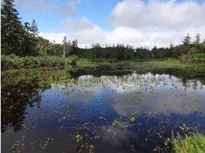 【北海道・ニセコハイキング】プライベートツアー!「神仙沼」や「鏡沼」で自然散策