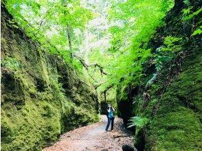 "Departure and arrival in Sapporo Hokkaido / Lake Shikotsu] Beginners are welcome! Fantastic green moss world ""Kaedezawa"" trekking"