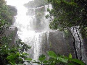 【沖縄・西表島】ユツン三段の滝&マヤロックの滝トレッキング(1日コース)写真データプレゼント