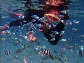 完全貸切!プライベートでカラフル熱帯魚!とサンゴ礁観察ツアー!ニモと一緒に写真を撮ろう!! 2歳のお子様~参加OK!