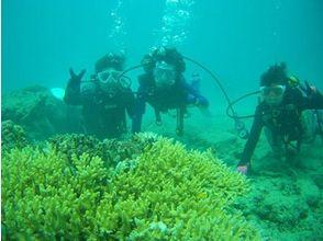 【鹿児島・奄美大島】体験ダイビング(4名様以上でご予約割引プラン)の画像