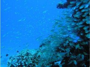 【鹿児島・奄美大島】ファンダイビング(1ボート1ビーチプラン)の画像