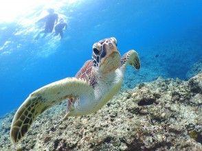 HIS Super Summer Sale in progress [Okinawa / Ishigaki Island] Let's swim with popular sea turtles! Half-day snorkeling   Underwater camera rental free