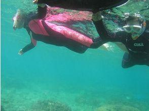 【鹿児島・奄美大島】誰でも参加!お手軽海遊びシュノーケリング!の画像