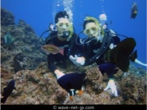 【ダイビング】青の洞窟体験ダイビングツアー ※WEB割引/2名様~※の画像