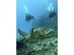 【鹿児島・奄美大島】海中のミステリーサークルを巡る!体験ダイビングの画像