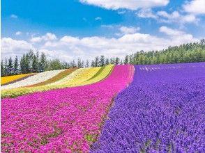 【北海道・札幌発着】夏のベストシーズンに行く!富良野ラベンダー畑と美瑛青い池を楽しむ旅