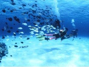 【沖縄・瀬底島】感動の海を体験!海水浴&体験ダイビングコース