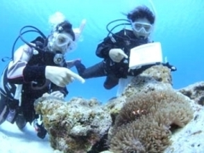 [Ibaraki Mito departure] pounding in the world of the sea! Izu of sea experience diving (Discover Scuba Diving)