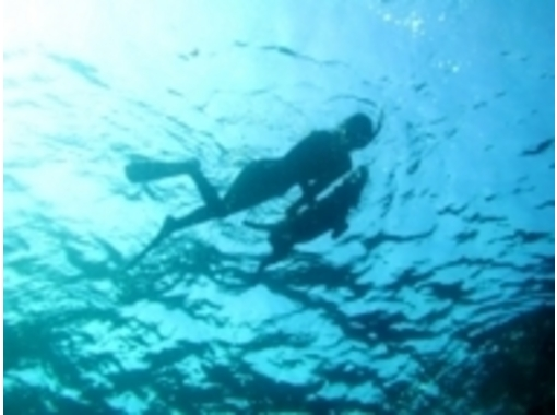 [Ibaraki ・ From Mito】 Let's go see it! Experience in the sea of Izu Snorkelingの紹介画像