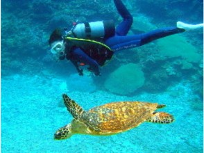 【沖縄・瀬底島】お得なセットプラン!パラセーリング&体験ダイビングの画像