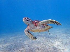 [沖縄/宮古島]⑧地區共同優惠券OK!讓我們在藍色透明的海裡游泳!海龜浮潛[免費照片數據]