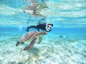 【宮古島/半天】遭遇率全球最高之一!熱門海龜浮潛 [照片數據免費]