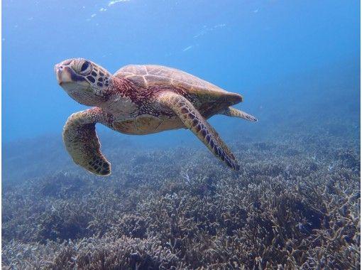 [沖縄/宮古島]⑧地區共同優惠券OK!讓我們在藍色透明的海裡游泳!海龜浮潛[免費照片數據]の紹介画像