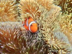 【宮古島/1日】宮古島の海を遊びつくす!選べるSUP/カヌー&シュノーケリングセット【写真データ無料】