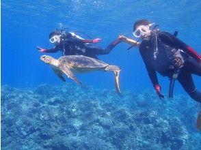 【沖縄・慶良間】慶良間諸島 1日 2ダイブ 格安 体験ダイビング シュノーケリング
