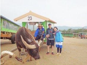 【冲绳/西表岛】感染控制措施完善!推荐给充满西表岛魅力的秋冬! Pinaisara 瀑布和由布岛观光旅游