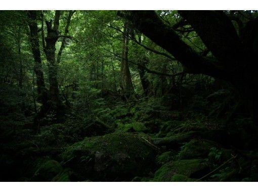 【送迎付き!】森と川を一日で楽しむ少し欲張りなツアー!トレッキング&SUP【お子様におすすめ】
