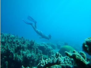 [Snorkel lesson] A moving undersea world even for beginners! Snorkeling tour with safe training