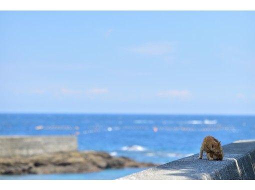 【秋でも海を楽しめる!】深島カヤックツアー(ガイド付き)