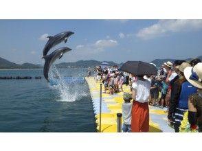 【香川・さぬき】シーカヤックでイルカに会いに行こう!ドルフィンファミリーコース