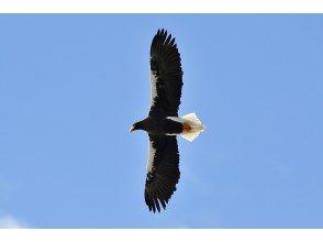 【栃木県・奥日光】オオワシ・オジロワシを始めとした野鳥をさがそう!【初心者大歓迎!1名様以上で催行】