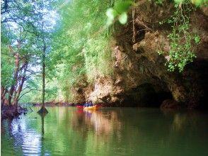【沖縄・石垣島】天然記念物~宮良川のヒルギ林~マングローブカヤック