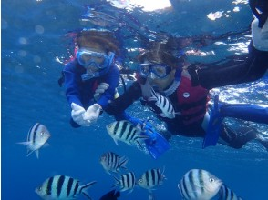 《Regional common coupon OK! 》 ★ Safe for first-time users and those who cannot swim! Boat Snorkeling ★ Photo data, feeding, bath towels are free! Chatan Town