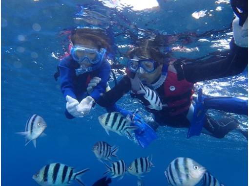《Regional common coupon OK! 》 ★ Safe for first-time users and those who cannot swim! Boat Snorkeling ★ Photo data, feeding, bath towels are free! Chatan Townの紹介画像