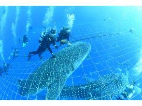 區域優惠券OK   [電暈對策的優秀店鋪] [強大!興奮的! ]鯊魚鯊和體驗深潛[免費攝影! ]