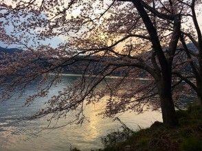 【夜桜カヤック】桜×ライトアップ! 水月湖・夜桜コース